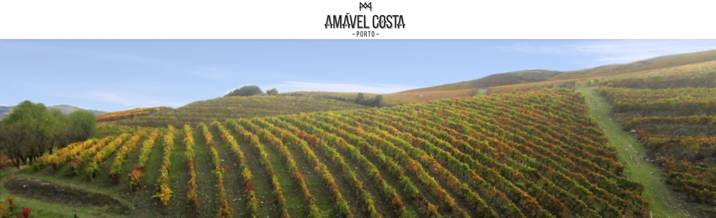 Amavel-Costa-Porto-Vinyards