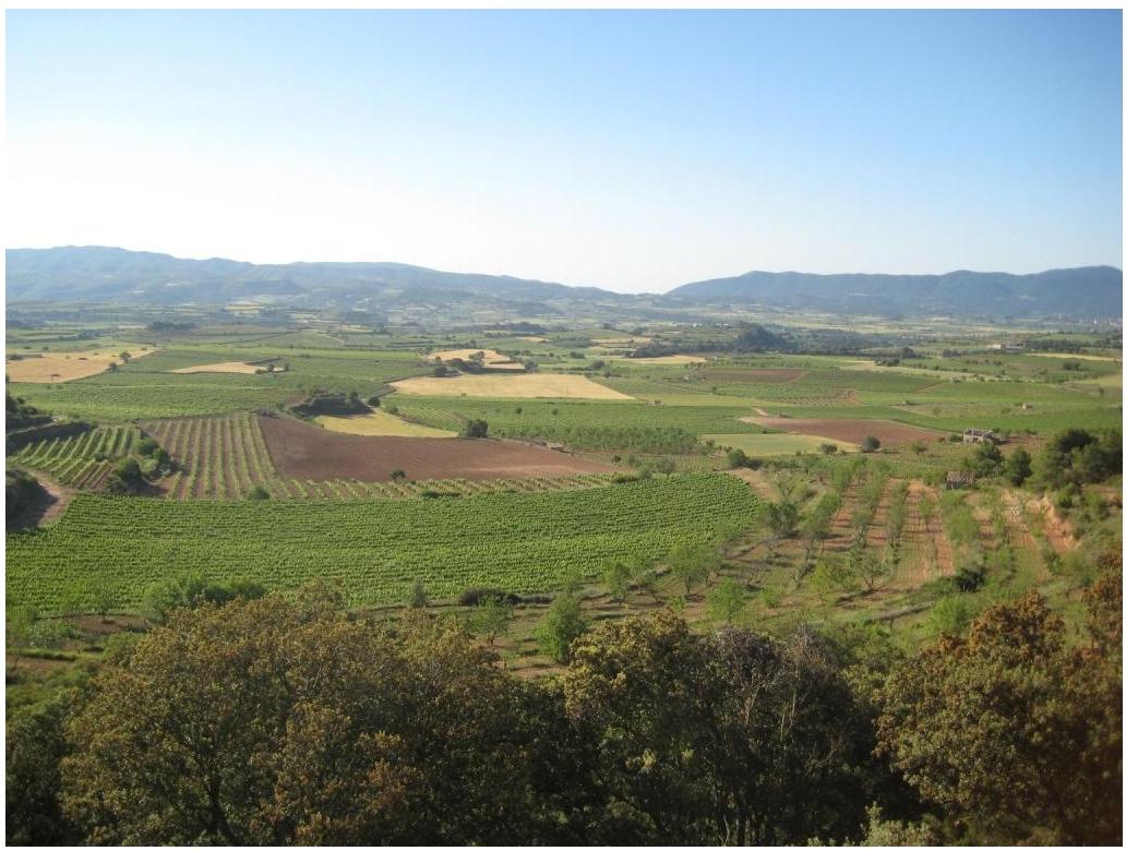 Weingut-Vinicola-de-Sarral-Cava-Portell-05