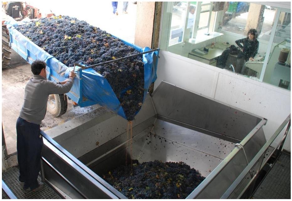 Weingut-Vinicola-de-Sarral-Cava-Portell-08