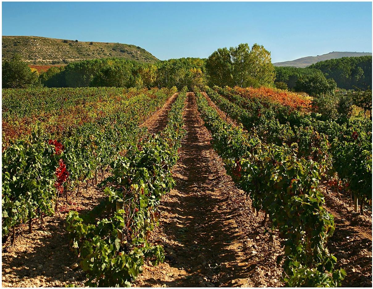 Weingut-Vinicola-de-Sarral-Portell-04